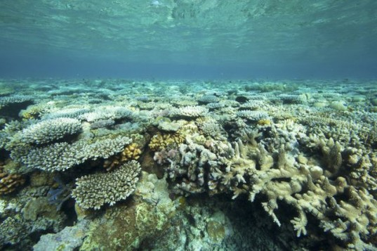 marine park network, ocean protection, australia marine park, wwf, great barrier reef, ocean conservation, marine conservation, rio+20,