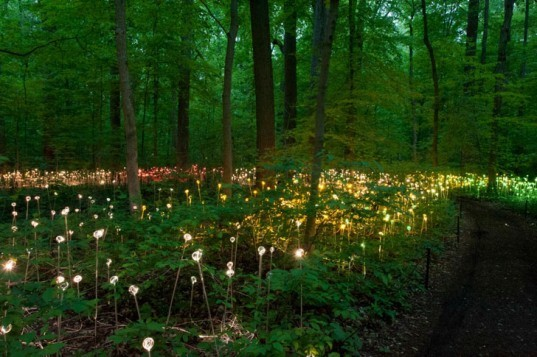 green design, eco design, sustainable design, LED light, Bruce Munro, Light installations, Philadelphia, Longwood Gardens