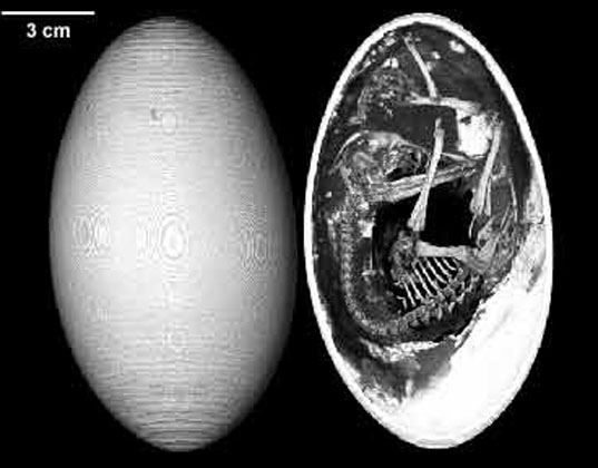 egg, embryo, inside an egg, egg design, what an egg is made up of