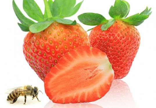 strawberries, strawberry prices, strawberry price rise, Strawberry Prices Could Rise Without Bees, Strawberry Prices Rise Without Bees, bees, bees and strawberries, bees effect on strawberry prices, pollination, wimbledon strawberry prices