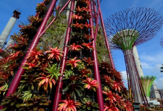 Solar Supertree in Singapore