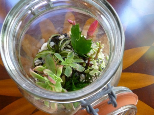 terrarium, terrarium diy, DIY Father's Day Gifts, diy gifts, diy gifts for dad, green gifts for dad, green father's day gifts, eco friendly father's day gifts, diy gift ideas, make it yourself gifts, recycled gifts, green gifts, last minute fathers day gifts, fathers day gifts