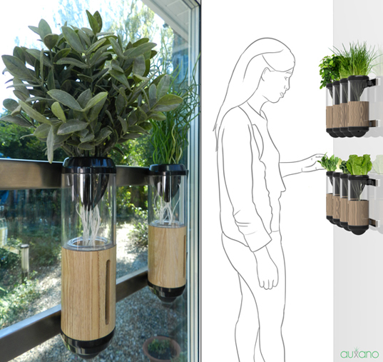 Auxano Hydroponic Vegetable and Herb Grower, green design, eco-friendly product