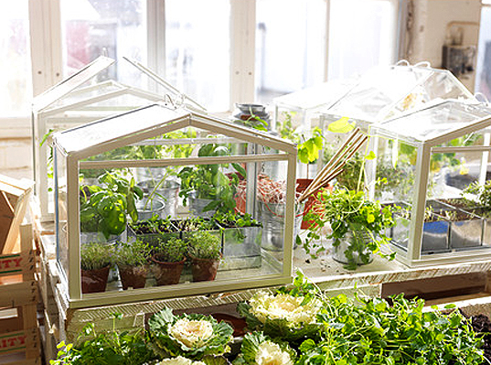 Ikea S Miniature Greenhouse Lets Anyone Create Their Own Indoor