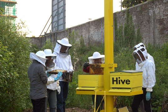 green design, eco design, sustainable design, bees, urban beekeeping, Bee Collective, Sky Hive, Urban beehive, Masstricht, Sphinxpark