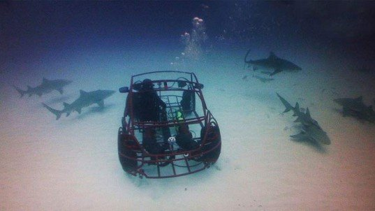 vw beetle shark cage  discovery shark week inhabitat green design innovation
