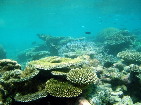 coralbots, biomimicry, coral reef, Scotland, reef damage, coral damage, Heriot-Watt University, robots,