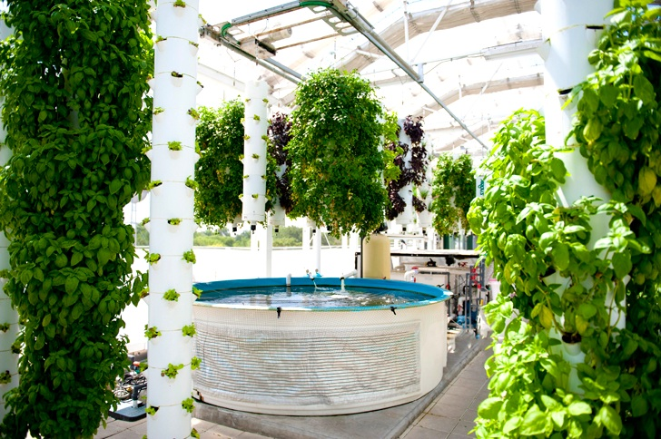 Rooftop Green Sky Growers Produce Thousands of Pounds of Fish and Veg in Florida