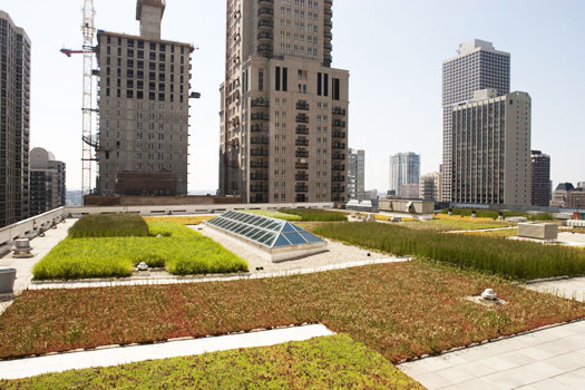 green roof, chicago green roof, green roof designs, modern green roof, Hoerr Schaudt Landscape Architects, landscape architecture