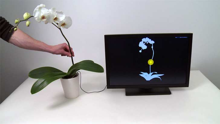 botanius interacticus, orchid, touche, software, computer, interactive, houseplant, sliding gesture
