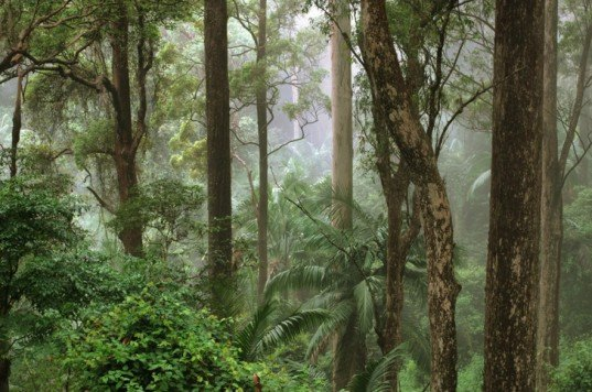 Jungle, forest, trees, Australia, misty forest, wooded forest