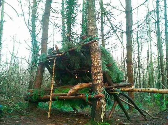 kevin langan, survival shelter, scotland, natural resources, 100 wild huts, hut, blog, pine