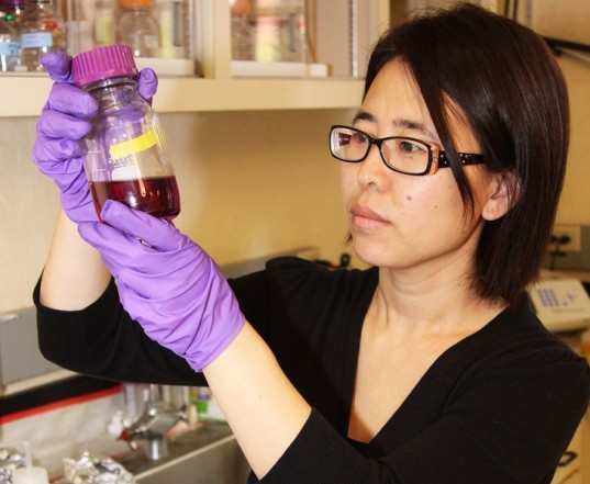 hong liu, oregon state university, microbial fuel cell, poo power, wastewater, sewage plant, microbial, biodegradable, poop power