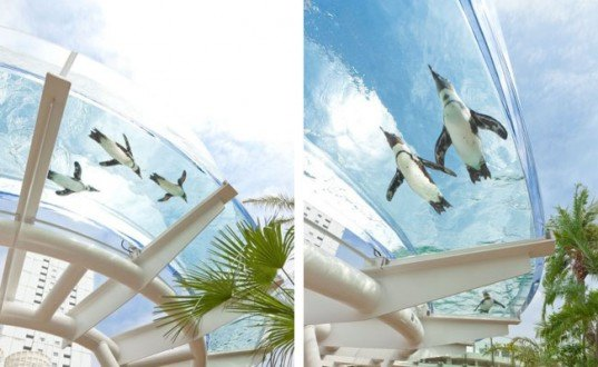 Sunshine aquarium, tokyo, flying penguins, sea lions, aquarium, sunshine aqua ring