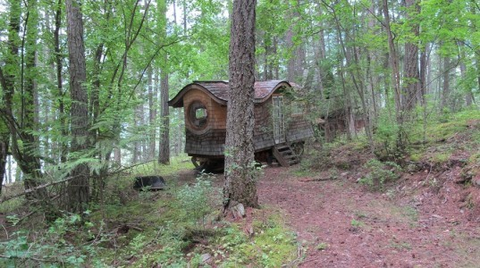 cedar forest, wagon life, small house, home on wheels, nature and home