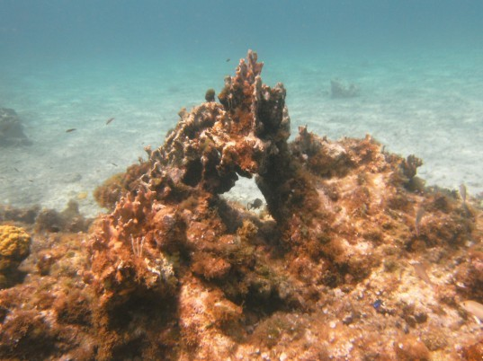 International Union for Conservation of Nature, caribbean, coral reef, climate change, global temperatures, caribbean coral reef,