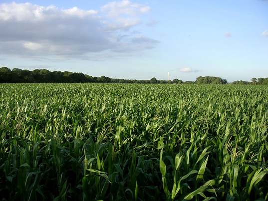 Corn crop, crop-based biofuels
