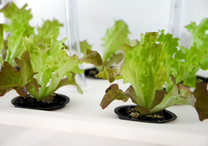 DIY ELIOOO Manual Shows How to Build Your Own Hydroponic ...
