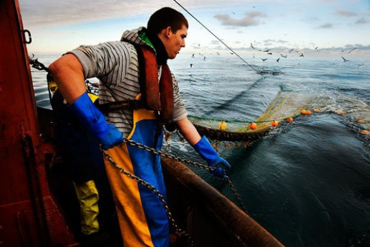 defra, cefra, cod, overfishing, commercial fishing, north sea, trawler, NEF, europe, UK, fishing ban, fish stocks