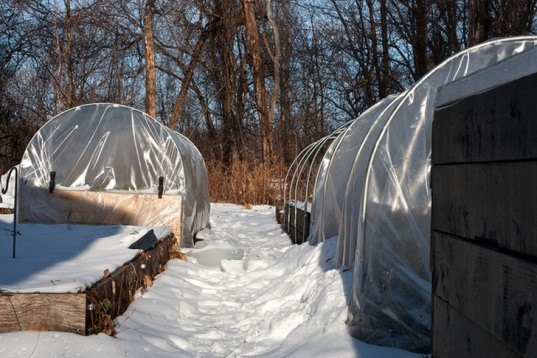 Extension gardening, cloches, hoophouse, greenhouse, winter garden