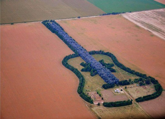 Argentine Forest Guitar, Forest Guitar, man made forest, guitar forest, love forest, manmade forest, planted forest, unnatural forest