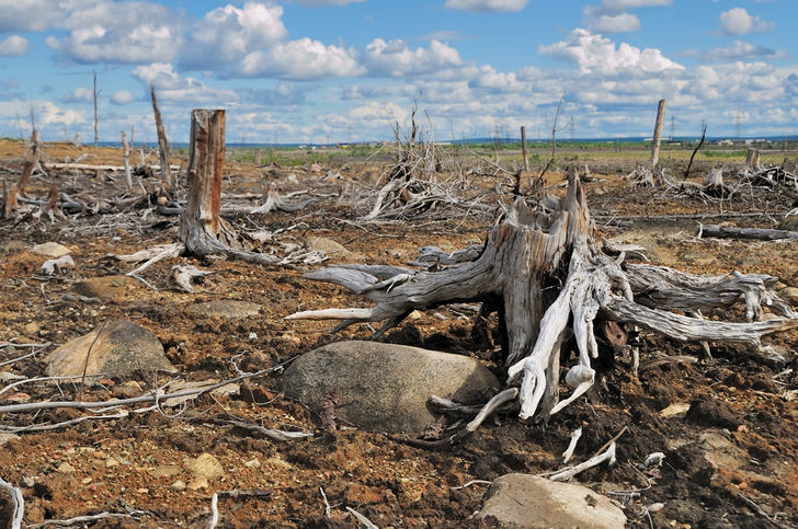 impact of deforestation on the earth Find out the causes, effects, and solutions to deforestation modern-day plague deforestation is clearing earth's forests on a massive scale, often resulting in damage to the quality of the land.