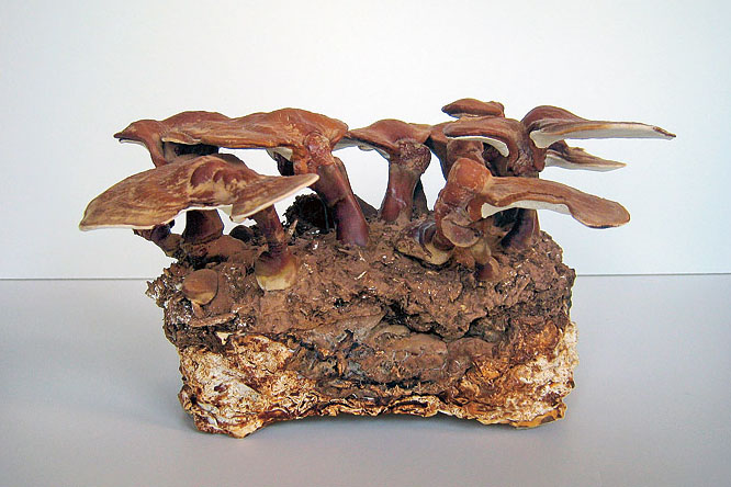 Architecture & Phillip Ross Molds Fast-Growing Fungi Into Mushroom Building Bricks ...