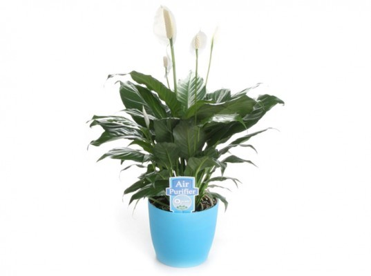 National Indoor Plant Week, indoor plants, indoor plant week, 02 for you, plants, houseplants, house plants, peace lilies, ferns and spider plants, benefits of indoor plants