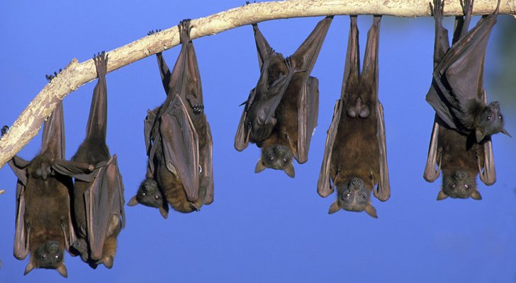 Nature Conservancy Builds Huge Artificial Bat Cave In Tennessee To Protect Bats From Disease