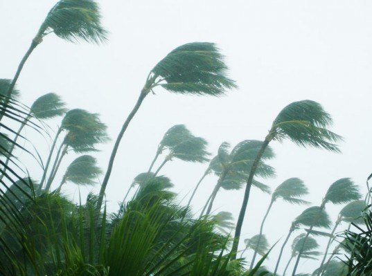 rain storm, tropical storm, hurricane, palm trees in rain, palm trees storm