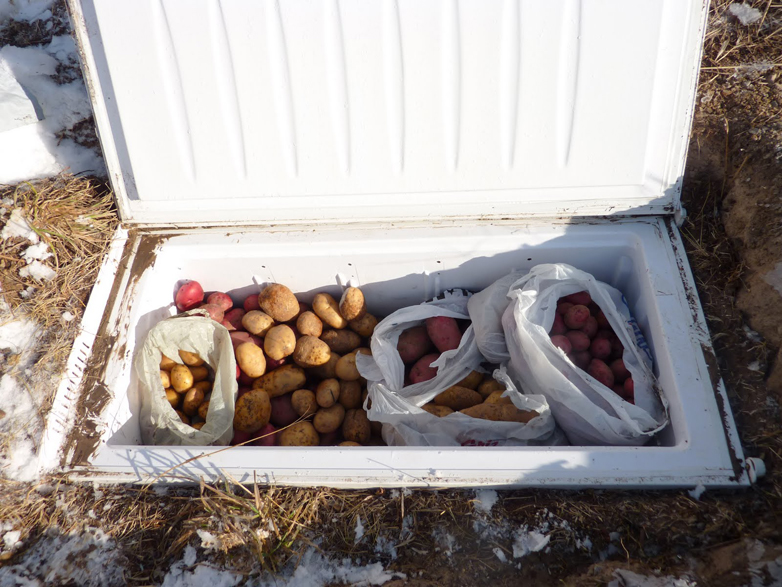 Build A Backyard Root Cellar From An Old Fridge, Freezer, Or Trash Can |  Inhabitat   Green Design, Innovation, Architecture, Green Building