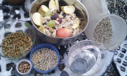 winter bird food, winter bird seed, bird seed, bird food, suet bird food, suet bird feeder, DIY bird feeder
