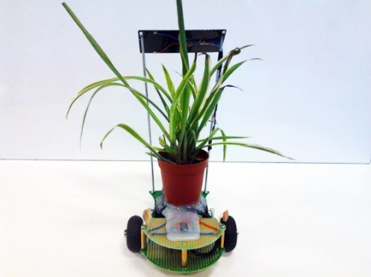 Plant Host Drone, Stephen Verstraete, drone, robot, roomba, indoor plants, house plants, sunlight