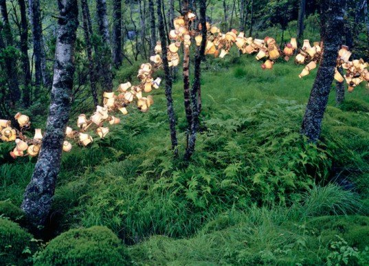 Rune Guneriussen, temporary installation, green art, sustainable artwork, nature art, everyday objects, recycled materials, repurposed objects, sustainable design, green design, light installation, land art