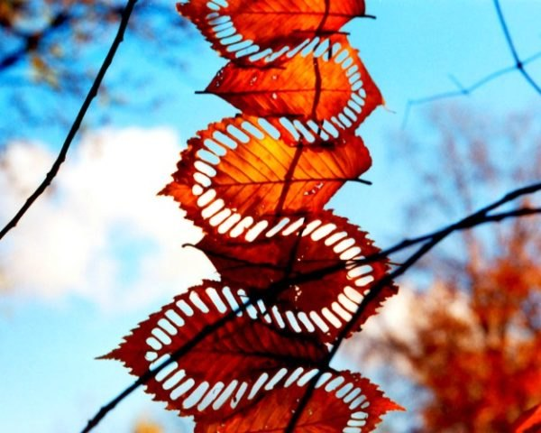Walter Mason, leaf art, land art, leaves, eco art, organic art