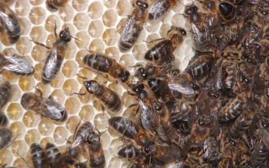 bees, pesticides, harm, study, nature, hive