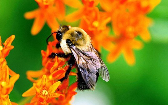 bees, pesticides, harm, study, nature