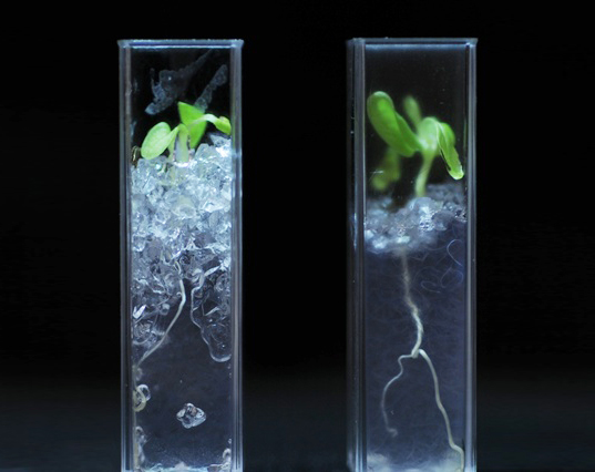 transparent soil, nafion, university of abertay dundee, uk, roots, rhizosphere, James Hutton Institute
