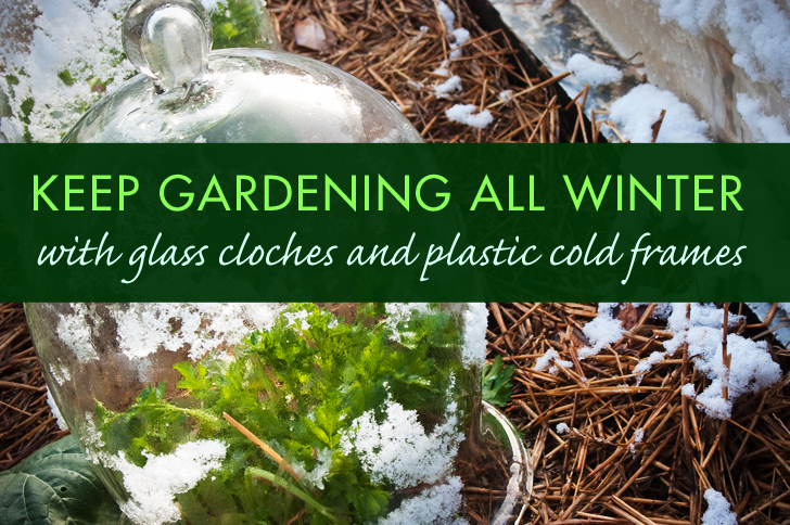 Extend Your Garden's Growing Season With Cloches and Cold Frames