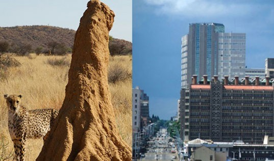 Termite Mound Inspires a Building, biomimicry, biomimicry.net, ask nature,asknature, inspiration in nature, design ideas, design inspiration, design tools, inspiration from nature,
