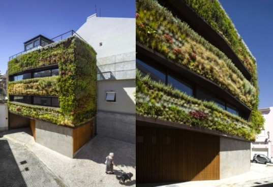 Luís Rebelo de Andrade, Tiago Rebelo de Andrade , Manuel Cachão Tojal, living wall, green facade, vertical garden, Lisbon, Portugal, daylighting, green design, sustainable design, eco-design, house with a green face, Travessa de Patrocinio, green lung of lisbon, air quality, insulation, courtyard
