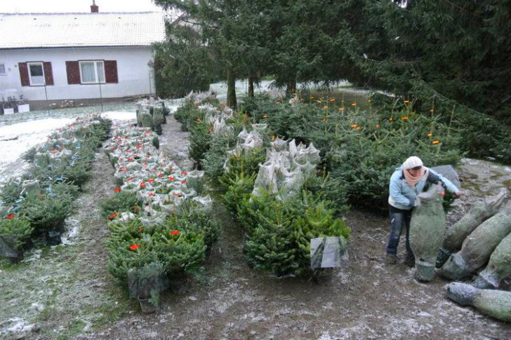Green Rabbit Nursery Delivers Replants Live Christmas Trees In Austria