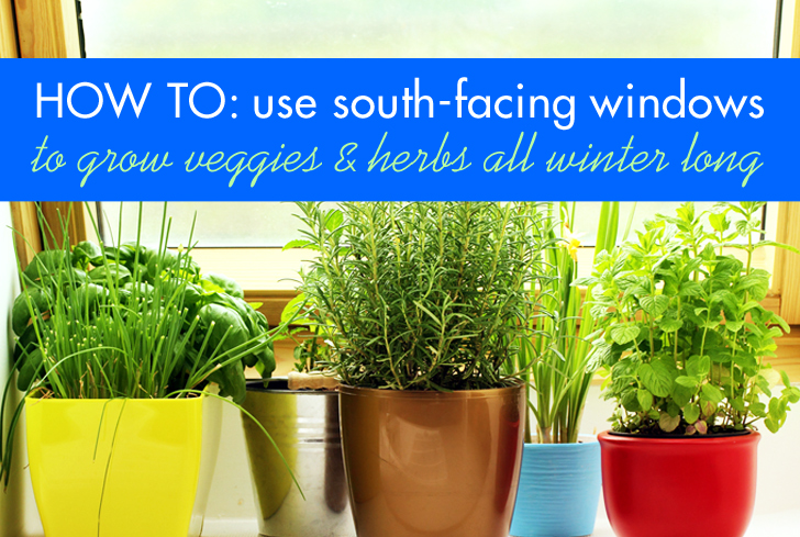 Maximize the usefulness of your south-facing windows to grow greens and herbs all winter.