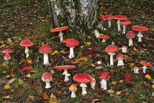 Santa And The Shrooms The Real Story Behind The Quot Design