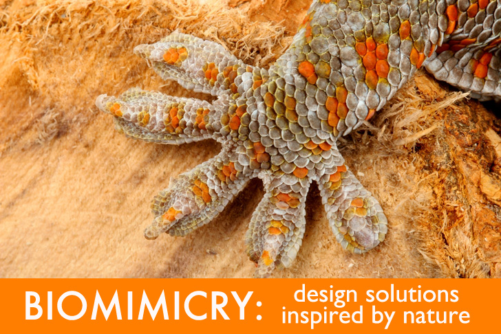 How Can Designers And Architects Use Biomimicry To Stay On
