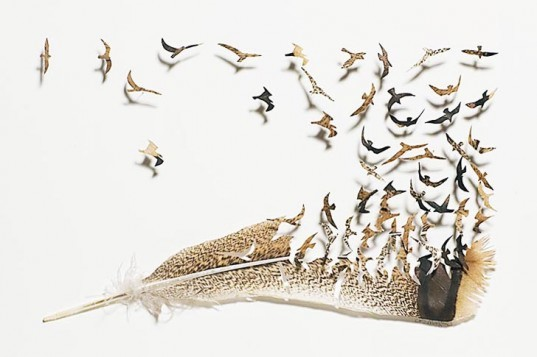 Chris Maynard, feather art, featherfolio, feathers, feather design