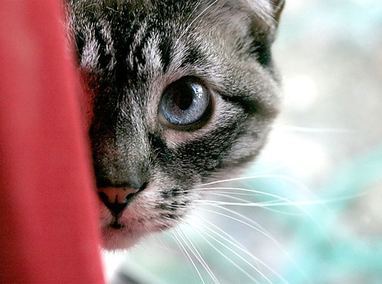 Secret life of the cat: The science of tracking our pets ...
