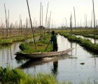 Myanmar's Inle Lake Shows Bridge to Ancient Hydroponic Farming Systems