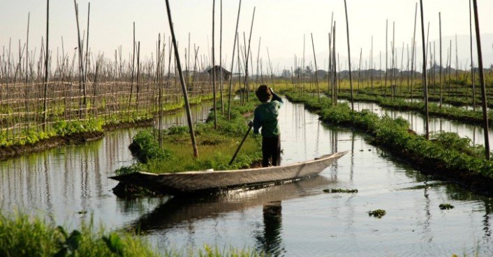 Myanmar's Inle Lake Shows Bridge to Ancient Hydroponic Farming