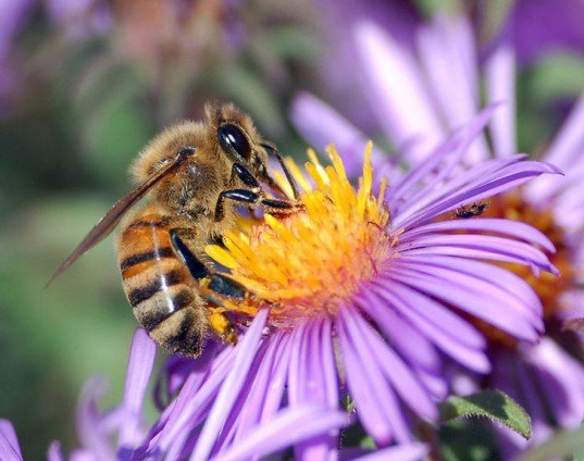 honeybee, pollinator, pesticides, neonicotinoids, colony collapse, b&q, wickes, home improvement, ban